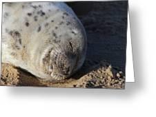 Seal Dream Greeting Card