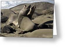 Seal Duet Greeting Card