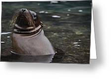 Seal In The Water Greeting Card