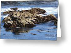 Seal Island Greeting Card
