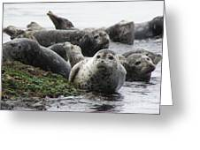 Seal Rock Greeting Card