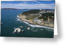 Seal Rocks At The Cliff House Greeting Card