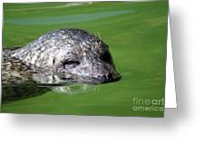 Seal Swimming Portrait Wildlife Scene Greeting Card