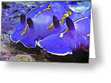 Sealife Underwater Snails Greeting Card
