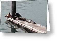 Seals At Oceanside Greeting Card