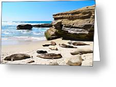 Seals Siesta On La Jolla Beach Greeting Card
