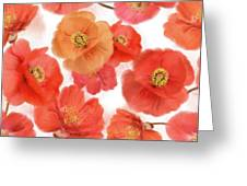 Seamless   Pattern Of Watercolor Poppy Flowers Greeting Card