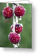 Seasonal Colors Greeting Card