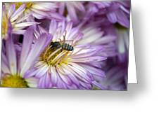Searching Honey Greeting Card
