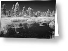 Searching The Pond Greeting Card