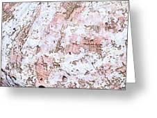 Seashell Abstract Greeting Card