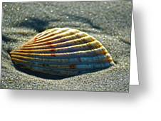 Seashell After The Wave Greeting Card