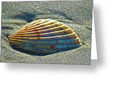 Seashell After The Wave Square Greeting Card