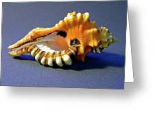 Seashell Cymatium Lotoium Greeting Card