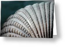 Seashell Designs Greeting Card