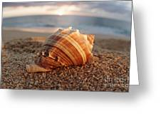 Seashell In The Sand Greeting Card