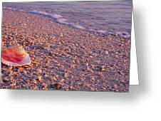 Seashell On The Beach, Lovers Key State Greeting Card