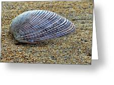 Seashell On The Sand Greeting Card