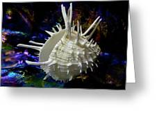 Seashell Spondylus Americanus Greeting Card