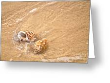Seashell Turbulence Greeting Card
