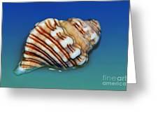 Seashell Wall Art 1 Greeting Card