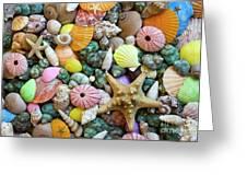 Seashells 3 Greeting Card