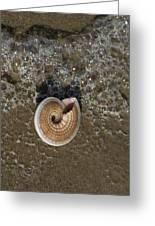 Seashells By The Sea Greeting Card