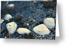 Seashells By The Water Greeting Card