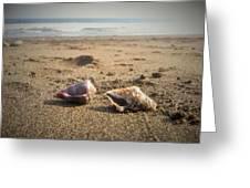 Seashells In The Sand Greeting Card