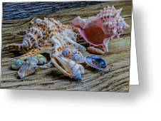Seashells On The Dock Greeting Card