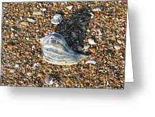 Seashells On The Seashore Greeting Card