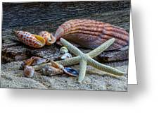 Seashells And Driftwood Greeting Card