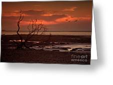 Seashore At Dawn Greeting Card