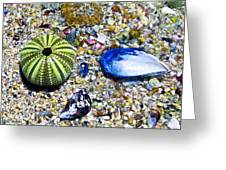 Seashore Colors Greeting Card
