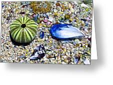 Seashore Colors Greeting Card