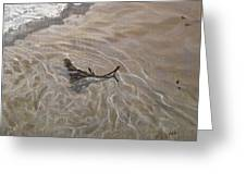 Seashore Reflections Greeting Card