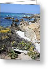Seaside Flowers And Rocky Shore Greeting Card