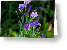 Seaside Gentian Wildflower  Greeting Card