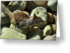 Seaside Ground Squirrel Greeting Card