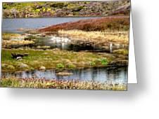 Seaside Marsh Greeting Card