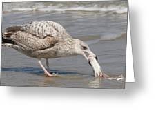 Seaside Snack  Greeting Card