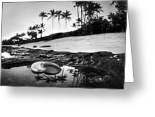 Seaside Treasure Greeting Card