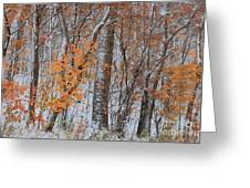 Seasons Overlapping Greeting Card