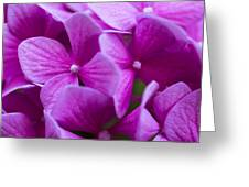 Seattle Summer Flowers Greeting Card