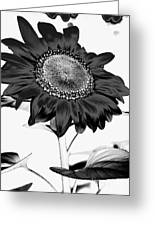 Seattle Sunflower Bw Invert - Stronger Greeting Card