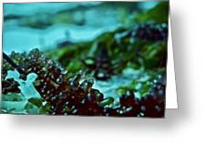 Seaweed 1 Greeting Card
