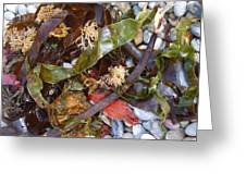 Seaweed And Pebbles Greeting Card