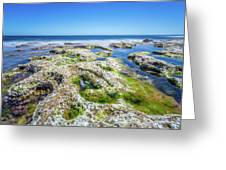 Seaweed And Salt Landscape. Greeting Card by Gary Gillette