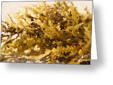 Seaweed In The Sand Greeting Card