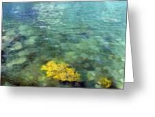 Seaweed Greeting Card